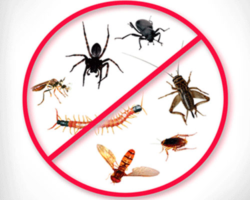 Lordsburg, NM pest control